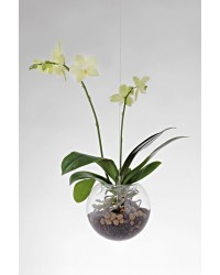 FLYING ORCHIDS / 160 mm
